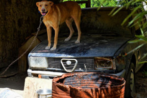 rodos - stare samochody 22