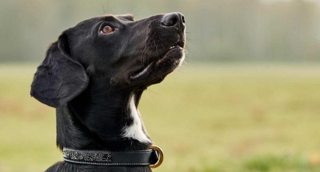 Gadżety samochodowe dla psa
